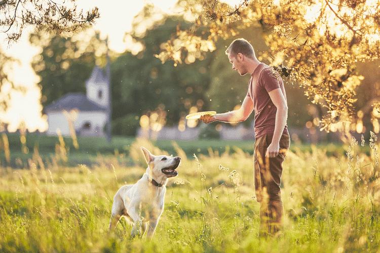 cách dạy chó