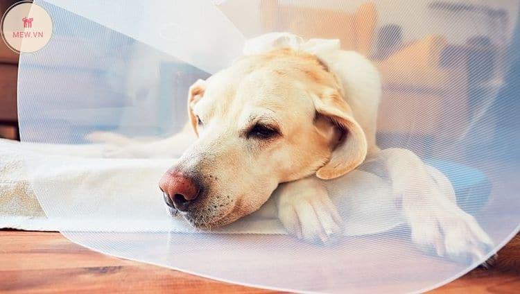 khám thú y cho chó
