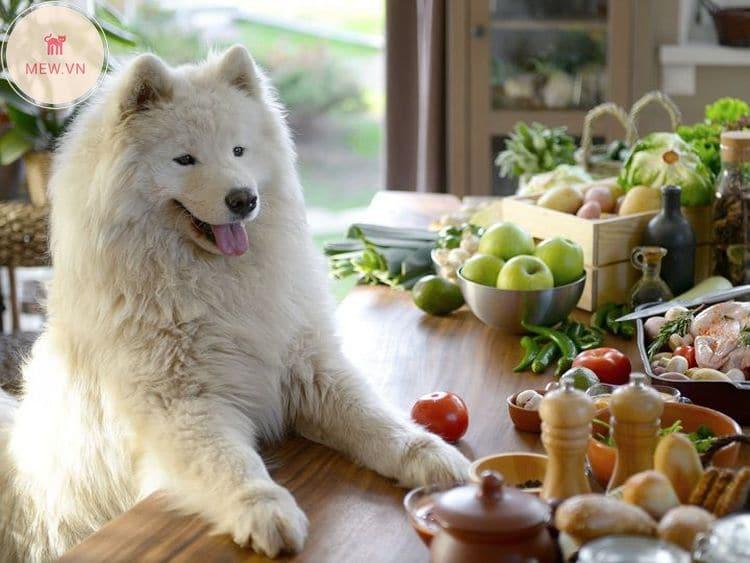 cho chó ăn nhiều rau