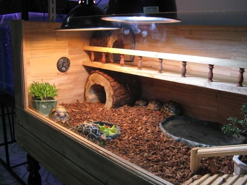 Chuồng của rùa Sulcata