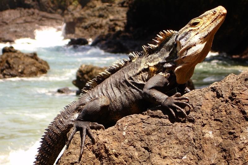 Top 10 loài Rồng Nam Mỹ phổ biến đẹp nhất trên thế giới 9