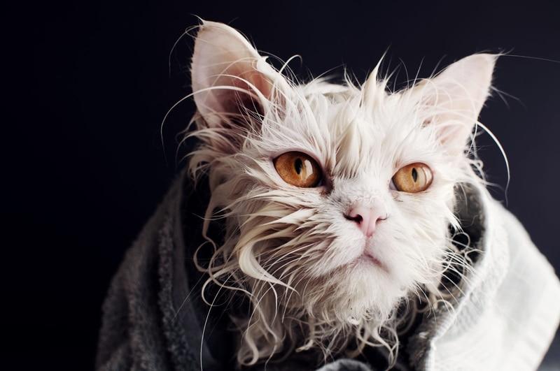 Lồng sấy mèo tự động tốt cho thú cưng