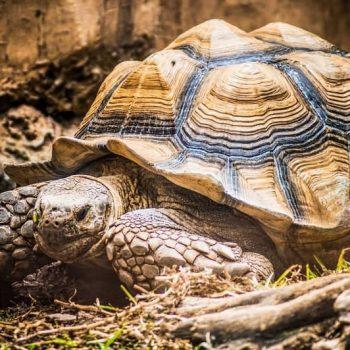 Rùa Cạn
