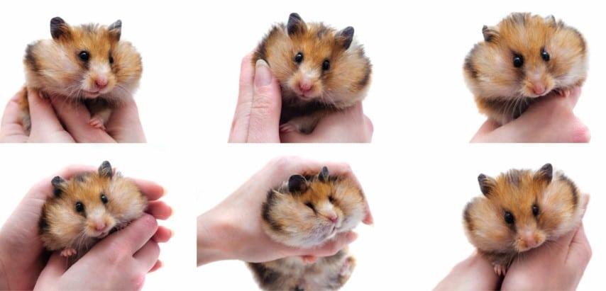 Những người bạn Hamster rất thân thiện