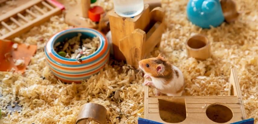 Chuồng nuôi chuột Hamster Bear nên rộng rãi