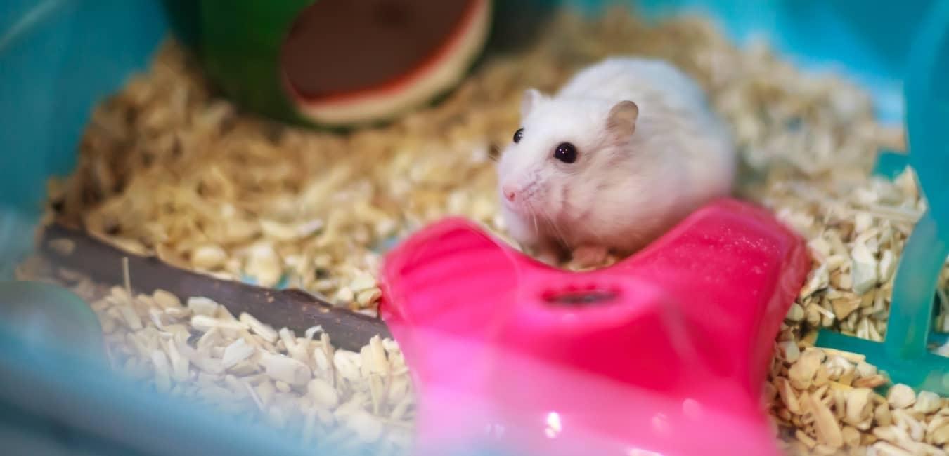 Chuồng nuôi chuột Hamster Winter White sạch sẽ và rộng rãi