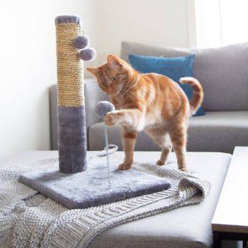 Sản Phẩm Cho Mèo