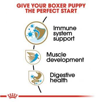 Thức Ăn Chó Boxer Con - Royal Canin Boxer Puppy Dry Dog Food 3