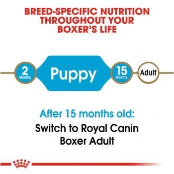 Thức Ăn Chó Boxer Con - Royal Canin Boxer Puppy Dry Dog Food 4