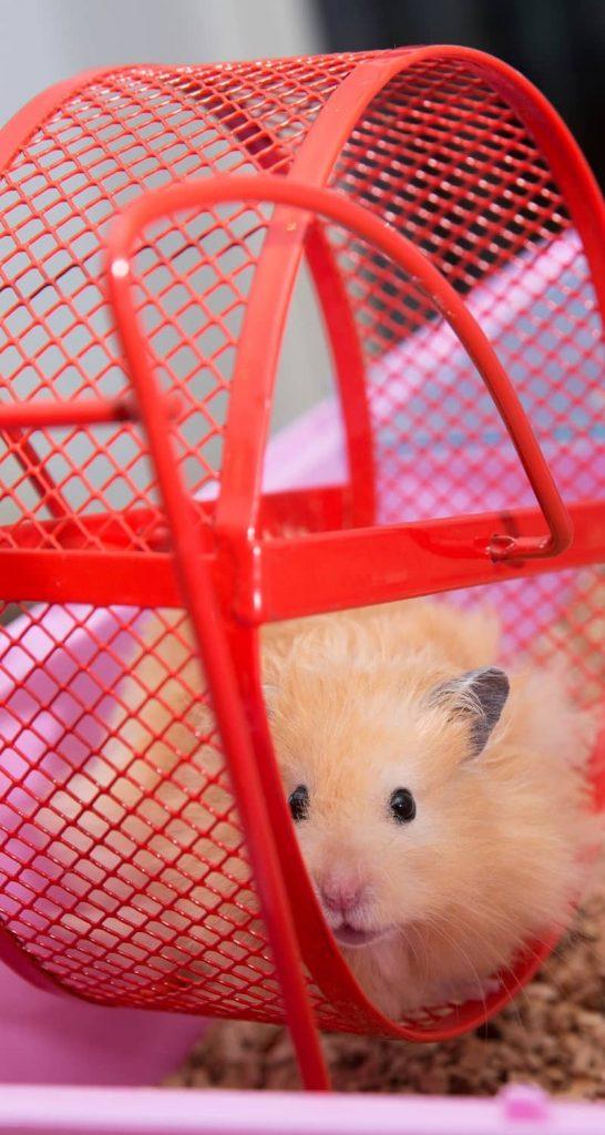 Chuồng nuôi chuột Hamster