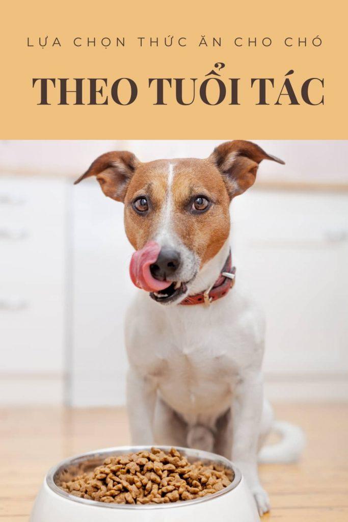 Lựa chọn thức ăn cho chó theo tuổi