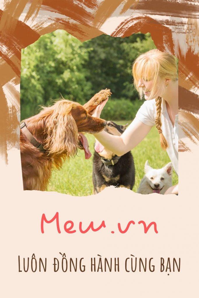 Thức ăn cho chó Mew.vn