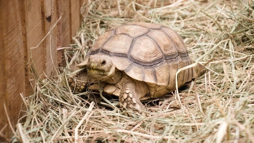 Chuồng nuôi rùa nên thông thoáng